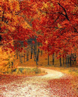 jesień złote liśćie droga w liściach